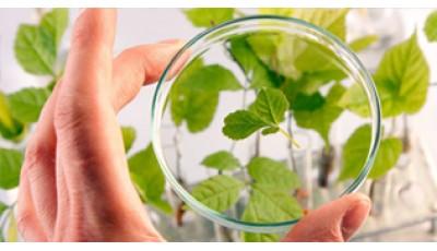 Наука «Ботаника». Грибы и низшие растения