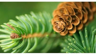 Высшие споровые и голосеменные растения. Отдел покрытосеменные. Морфология вегетативных и генеративных органов