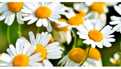 Основы физиологии растений
