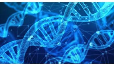 Эпигенетика, как первичный механизм формирования гормонального здоровья