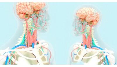 Основы фундаментальной медицины